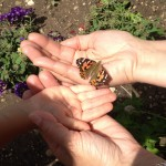 Spending time with our mariposa friends
